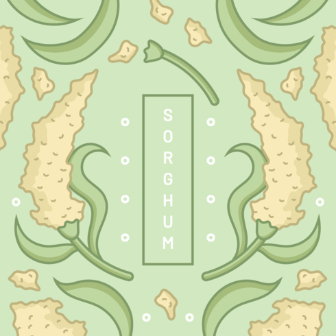 Grain Sorghum Vector