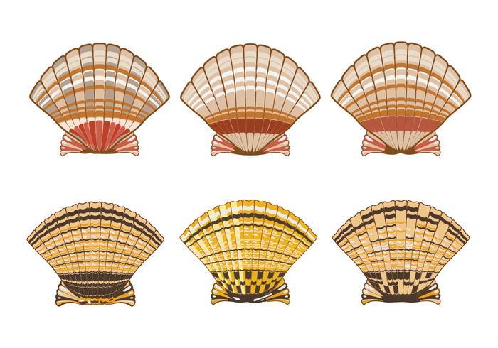 Satz der Kamm-Muschel-Shell-Illustration lokalisiert auf weißem Hintergrund