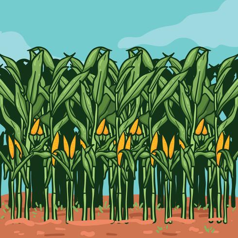 Corn Stalks på Farm illustration