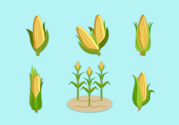 Corn Stalks Free Vector Pack