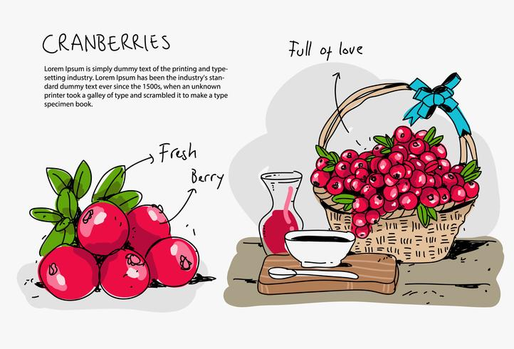Red Cranberries Hand Drawn Doodle Vector Illustration