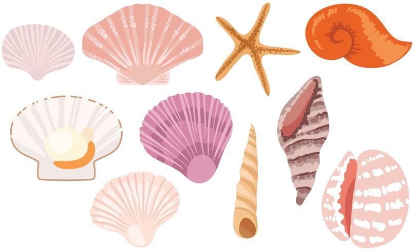 Kostenlose Seashells Vektoren