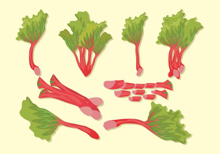 Fresh Rhubarb Vector set