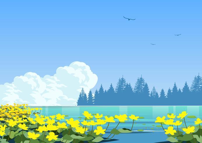 Marigold do pântano