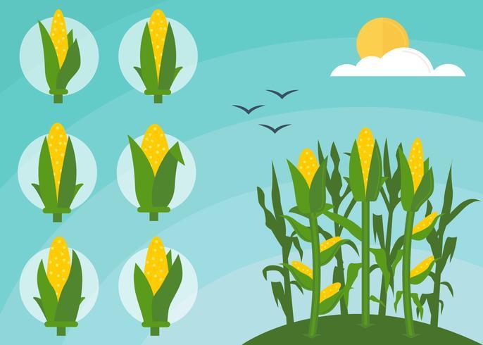 Free Outstanding Corn Stalks Vectors