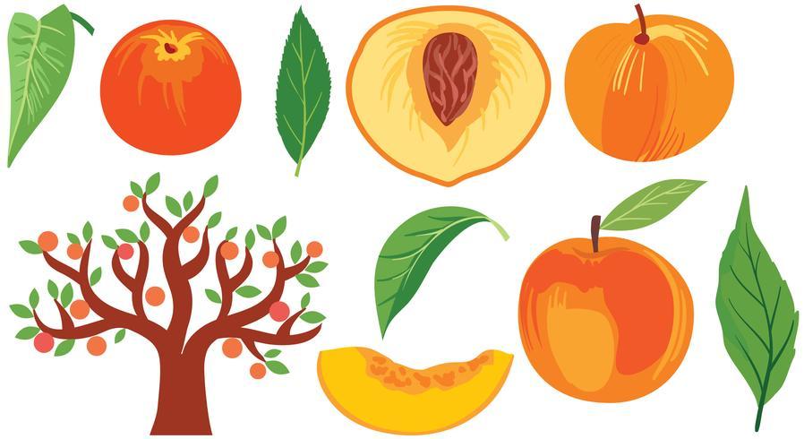 Peach Vectors