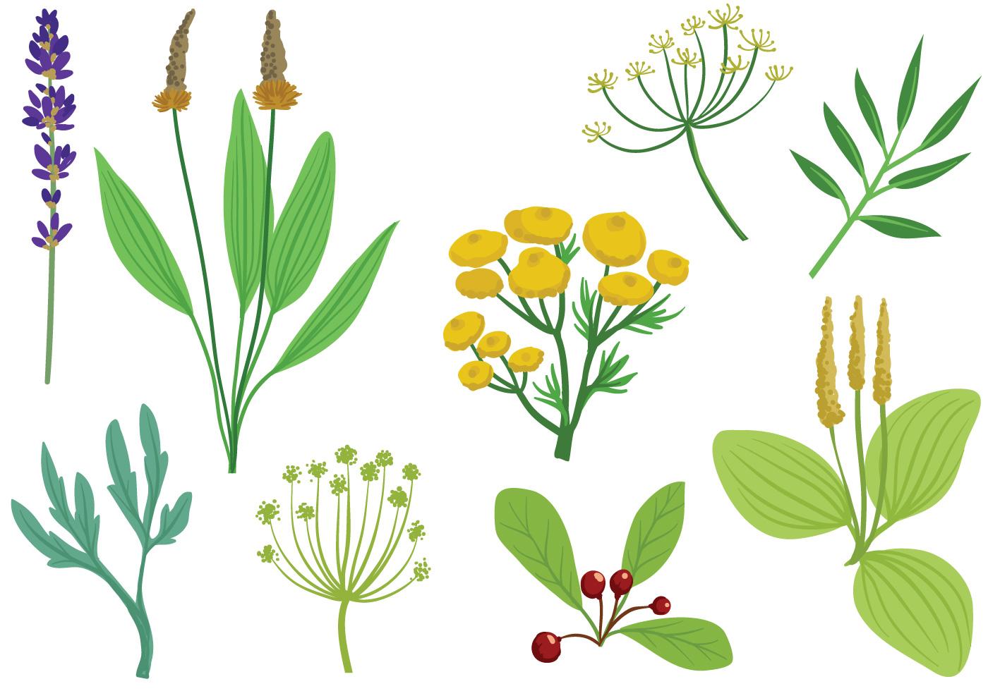 Free Medicinal Herbs