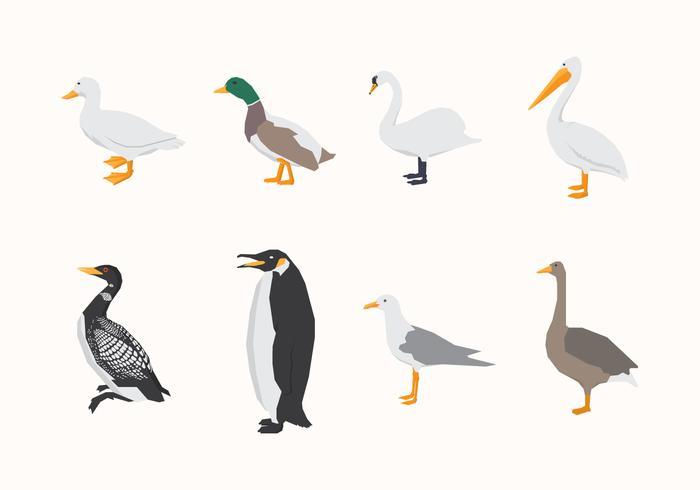 Pássaros aquáticos