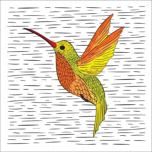 Hand Drawn Vector Hummingbird Illustration