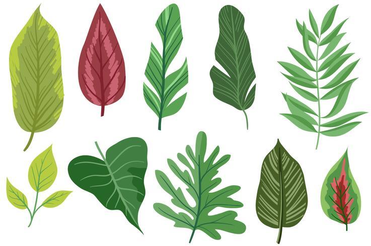 Gratis exotiska löv 2 vektorer