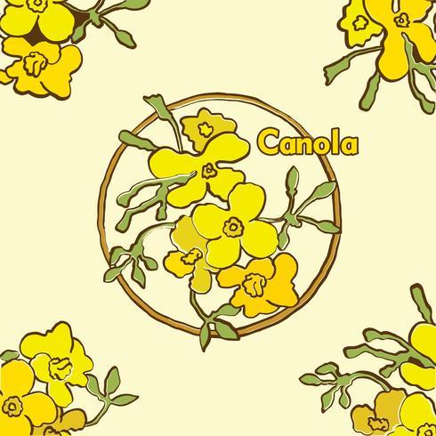 Canola blommor vektor