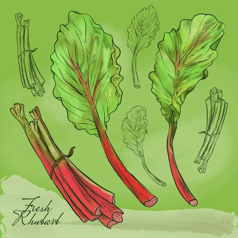 Fresh Rhubarb Illustration