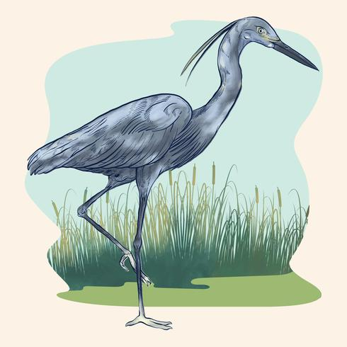 Heron Bird With Reed And Marsh Background Illustration