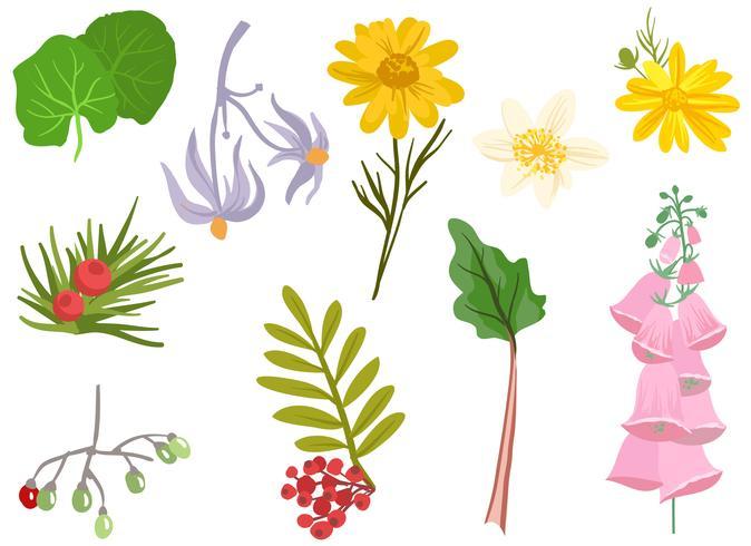 Medicinska växter vektorer