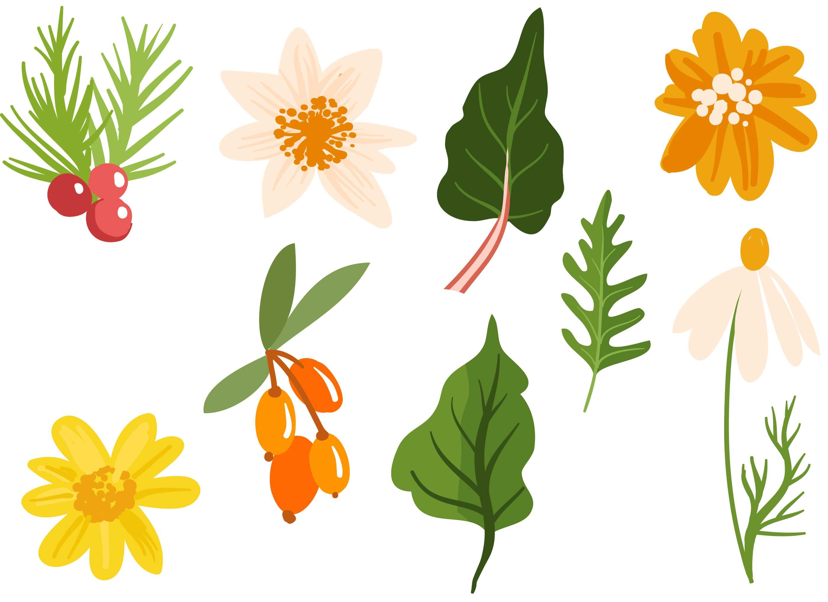 Plantas medicinales y vectores de hierbas descargue for Hierbas y plantas medicinales