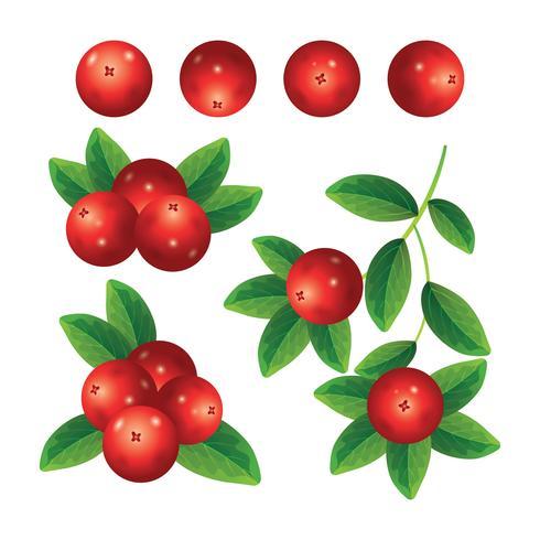 cranberry's collectie set