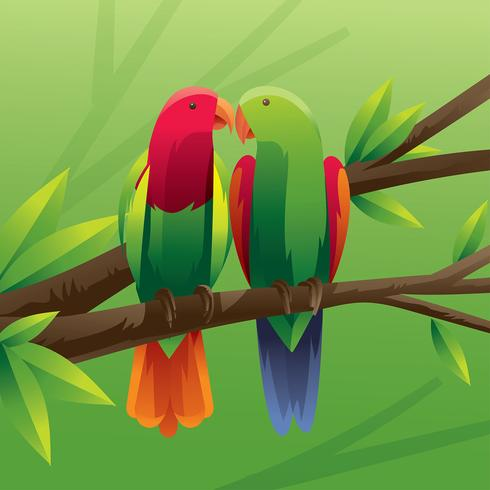 Parrots Couple Vector