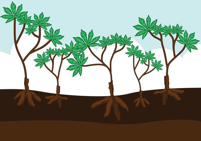 Vettore di piante di manioca