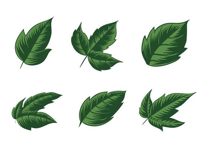 Poison Ivy Plant vecteur libre