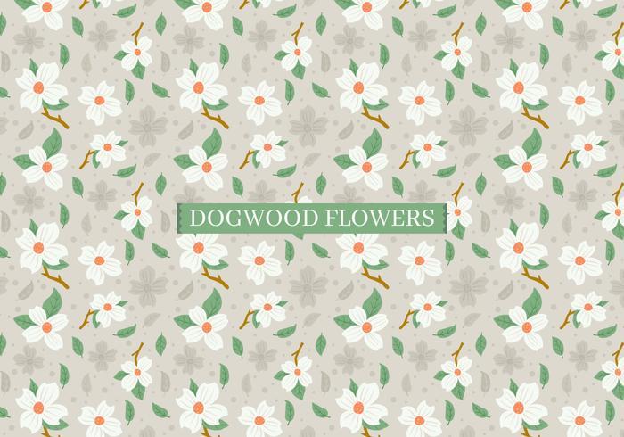Kornoelje bloemen achtergrond