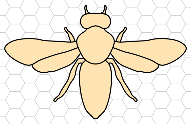 Bumble Bee With Honeycomb Background