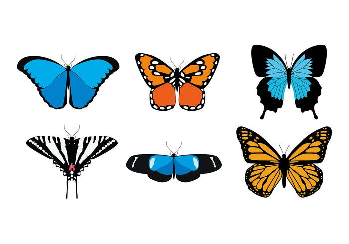 Butterfly Various Species Free Vector