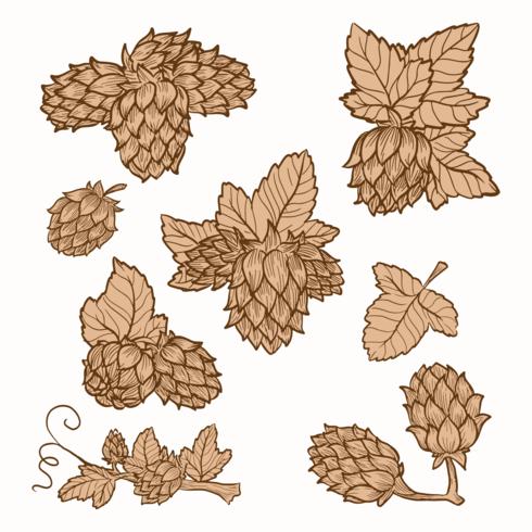 vectores de plantas de lúpulo