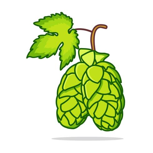 Flat Hop Plant Illustration