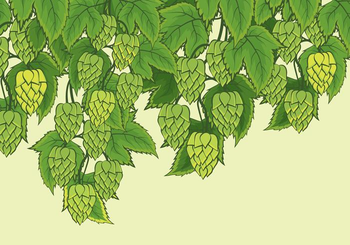 Hop Plant Vector Background