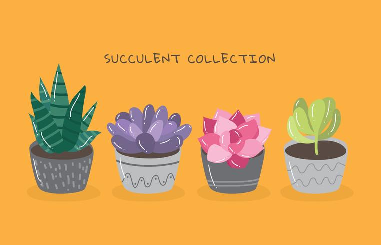 Succulent Collection vector