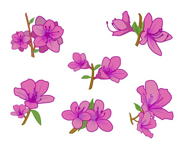 bonita azalea vector - Descargar Vectores Gratis, Illustrator ...