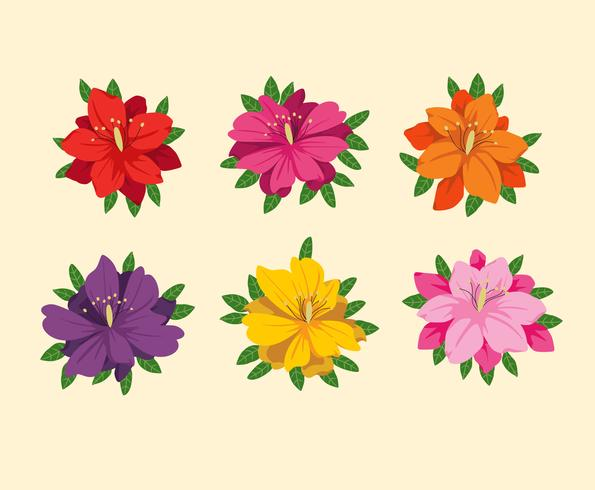 Färgglada Azalea Blommor Vector