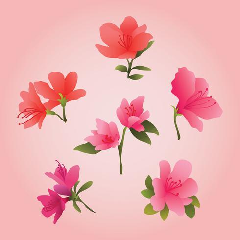 Beautiful Azalea Flowers Clipart