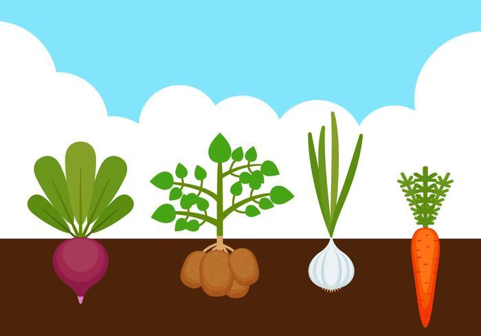 Outstanding Vegetable Garden Vectors