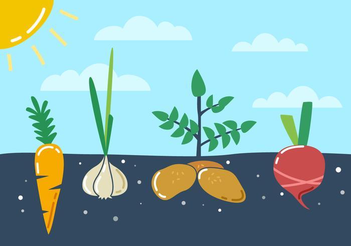 Vecteurs de légumes potagers exceptionnels