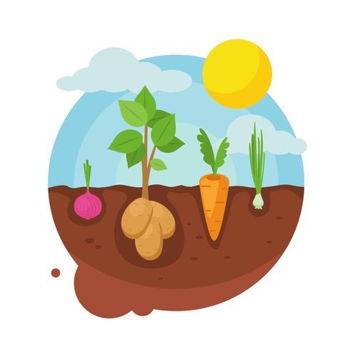 Gemüsegarten-Vektor-Illustration