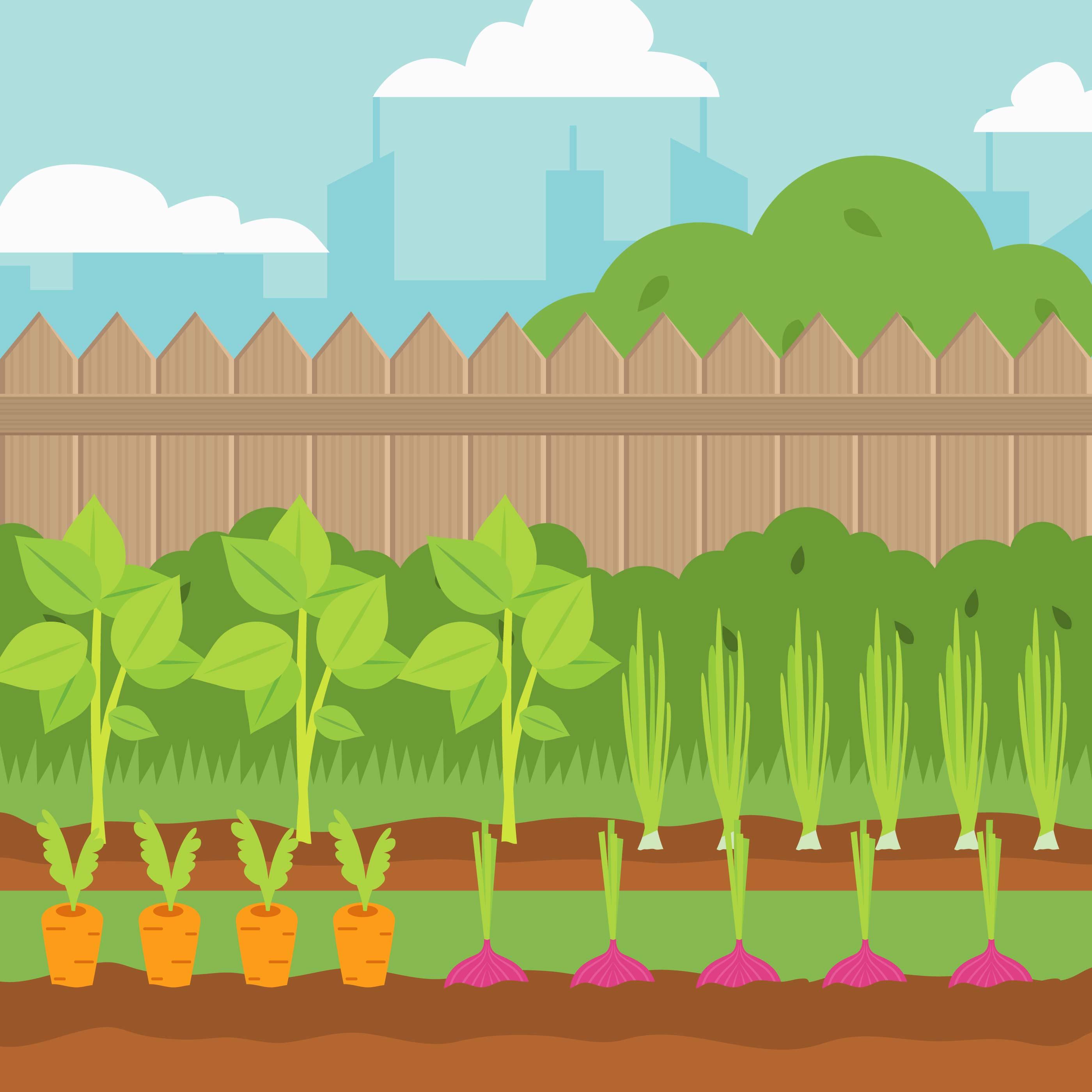 Vegetable garden vector Illustration - Download Free ...