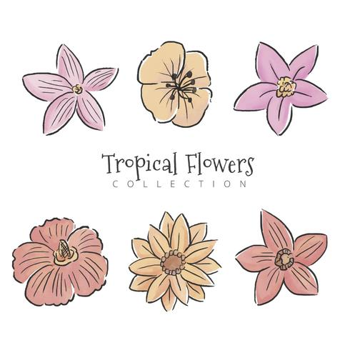 Collection de fleurs tropicales