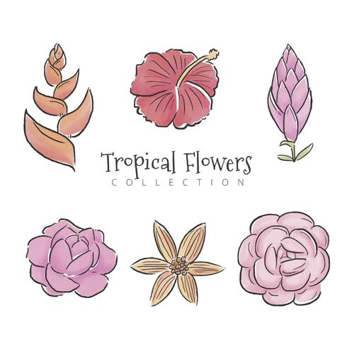 Tropical Flowers Set Collection