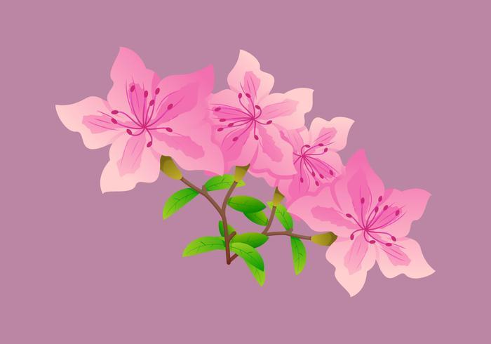 Bellamente Azalea Flores Vectores