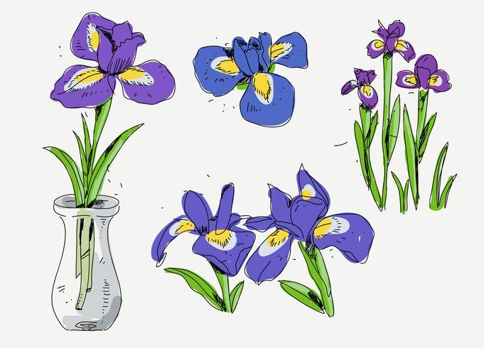 Ilustración de vector de boceto de flores de iris dibujado a mano