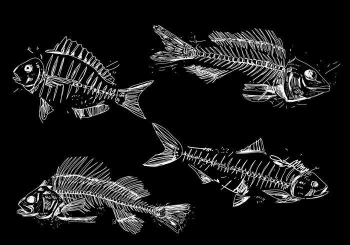 Realistic Fishbone Hand Drawn Vector Illustration