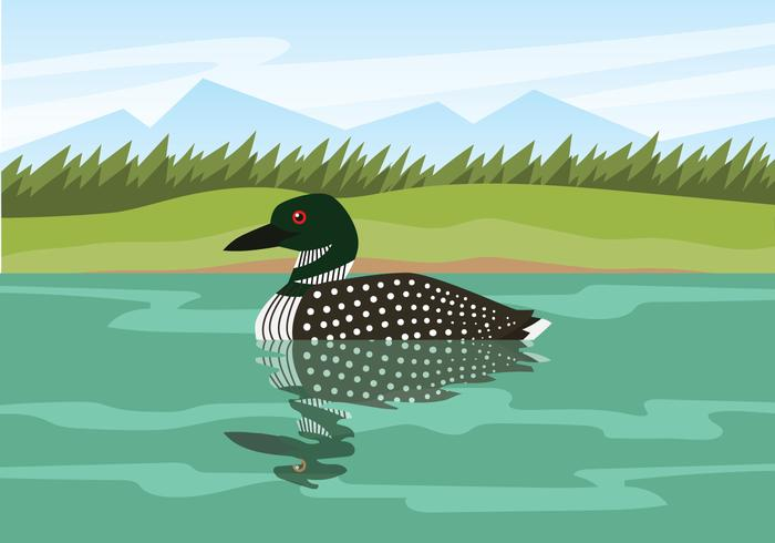 Loon Floating On Water