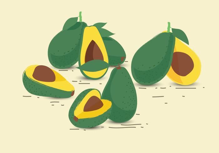 Vector de frutas de aguacate