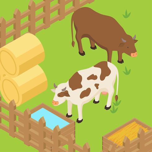 Vettore isometrico di bestiame