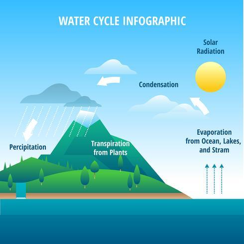 Vector de infografía de ciclo de agua
