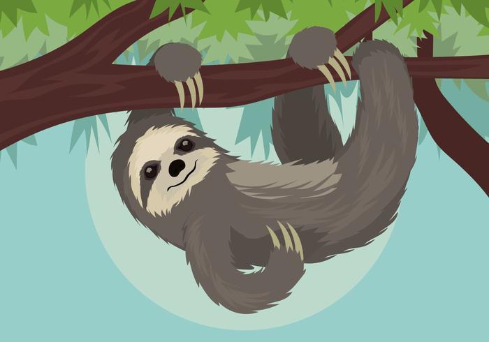 sloth vektor illustration