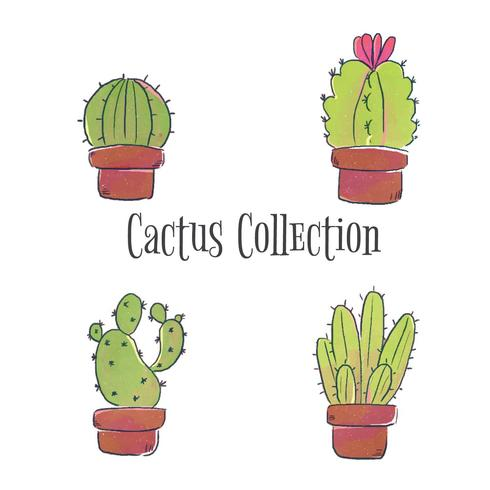 Colección linda del conjunto del cactus