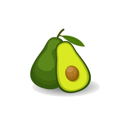 Avocado Vector Illustration