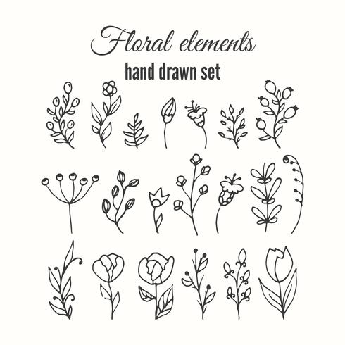 Vector floral decorative set. Herbs and wild flowers.
